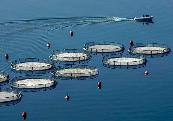 Αναγνώριση της Ελληνικής Οργάνωσης Παραγωγών Υδατοκαλλιέργειας