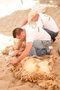 Παραδοσιακές Kουρές προβάτων στο Creta Maris Beach Resort υπό την αιγίδα του «We do local»