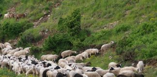 Υπουργείο Αγροτικής Ανάπτυξης: 2η πρόσκληση για βιολογική κτηνοτροφία