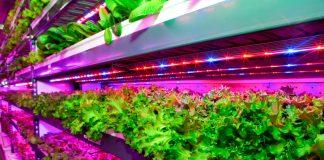 Η Emirates Flight Catering δημιουργεί εγκατάσταση κάθετης γεωργικής καλλιέργειας