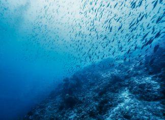 «Sea Change Greek Islands» από το Ίδρυμα Αθανάσιου Κ. Λασκαρίδη