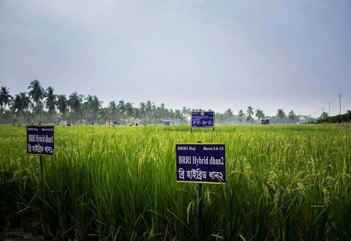 Η Alibaba στηρίζει την παραγωγή υβριδικού ρυζιού