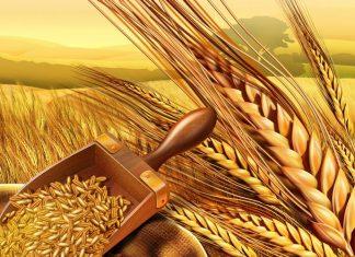 Στα ύψη οι τιμές σε σιτάρι και ρύζι