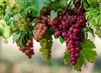 O ΣΜΟΕ ζητά αποκατάσταση ανισοτήτων από τον φόρο στο κρασί