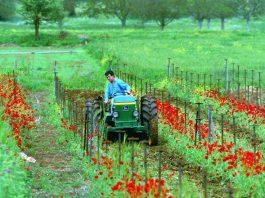 Κατάθεση δικαιολογητικών για το αγροτικό ρεύμα έως τέλος Μαΐου 2019