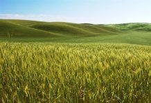 Παραχωρούνται αγροτικά τεμάχια